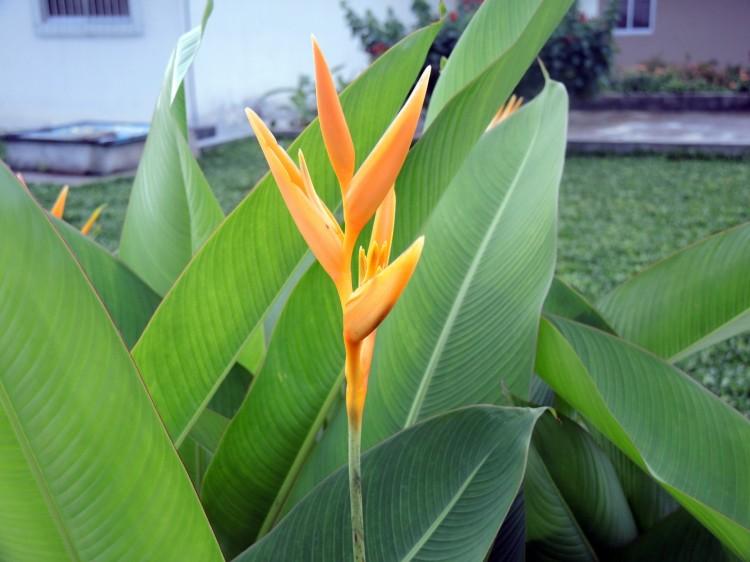 exotic-flower-1382373377L5r